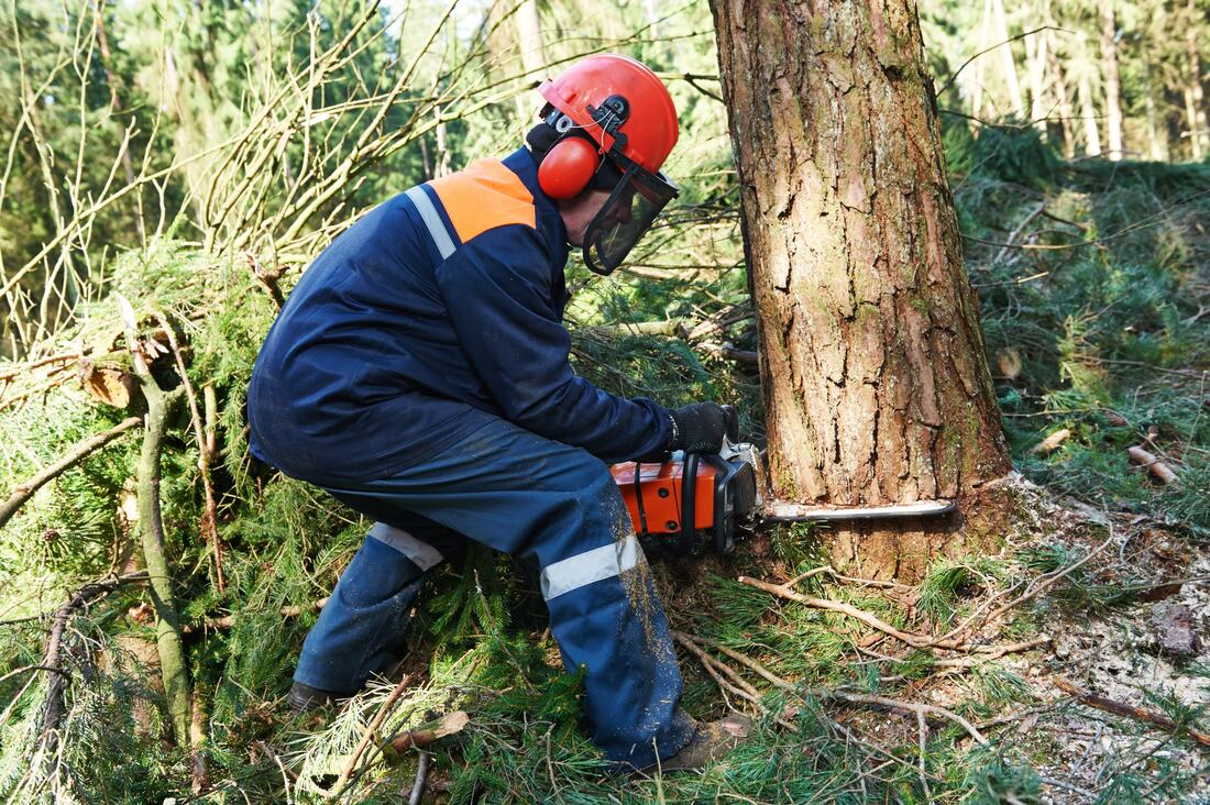 tree-removal-companies