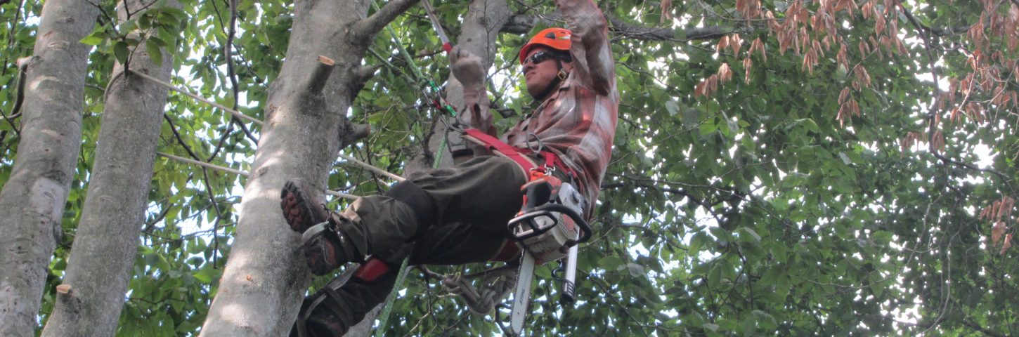 how to tree pruning
