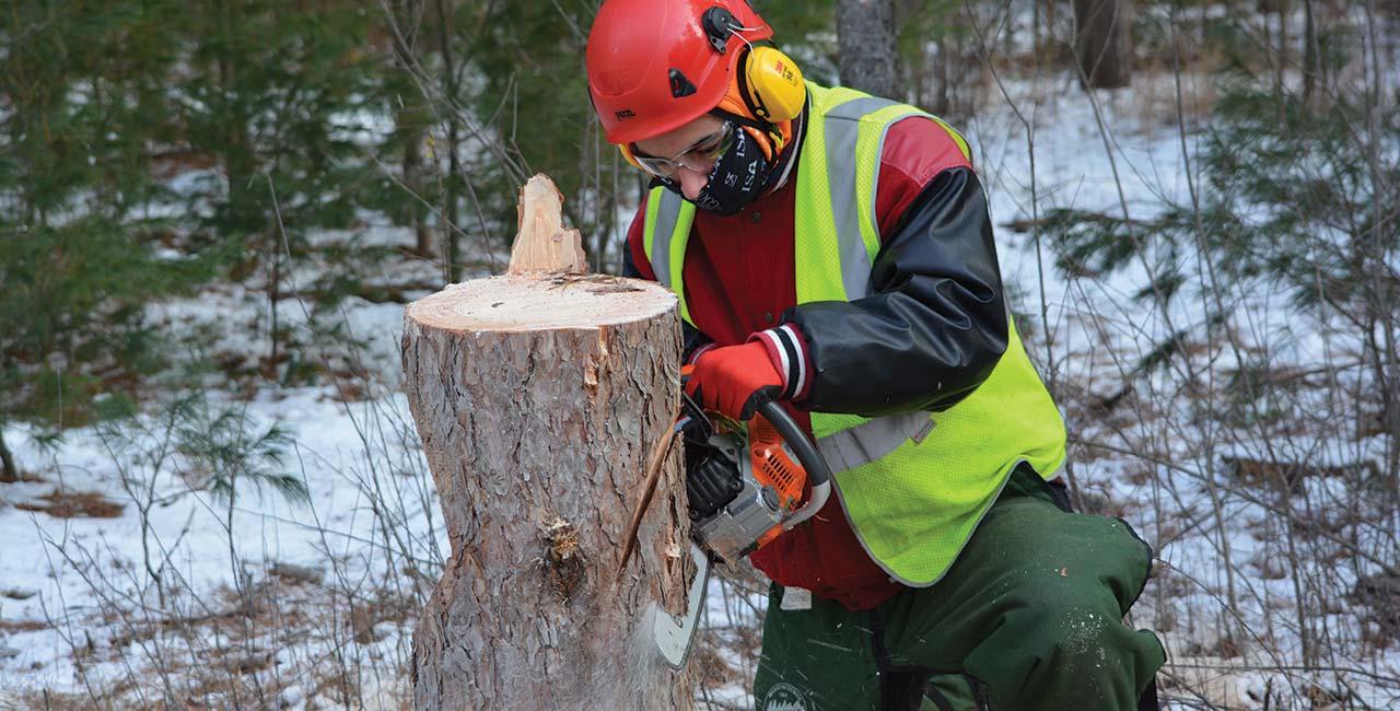 arborist jobs