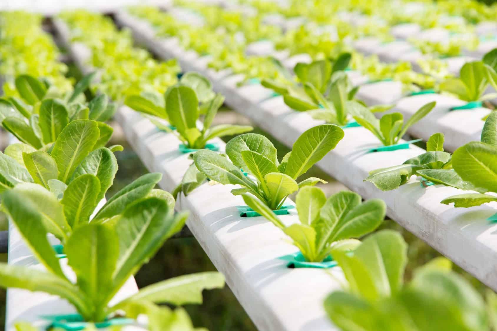 hydroponics equipment supplier